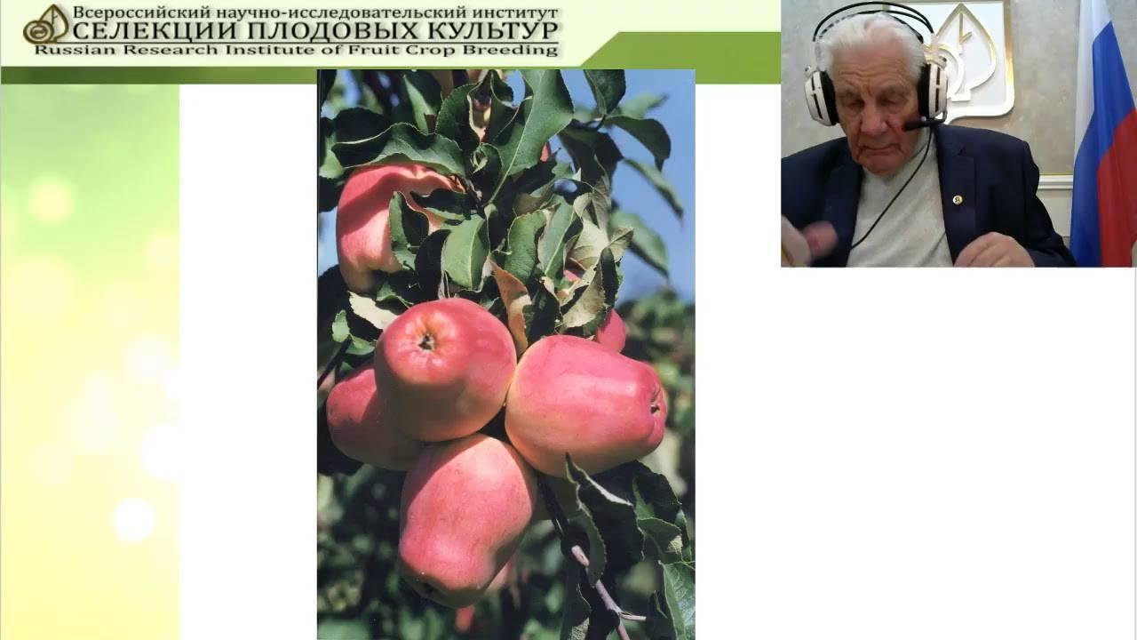 Яблоня орловим: правила посадки и описание 8 особенностей сорта