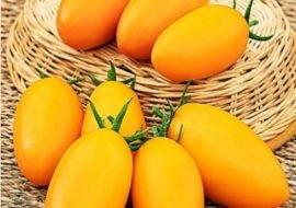 Плоды с универсальным применением — томат золотое руно: описание сорта и его характеристики