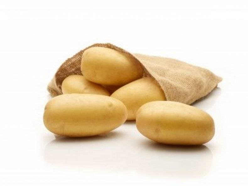 Картофель королева анна: описание сорта, фото, отзывы
