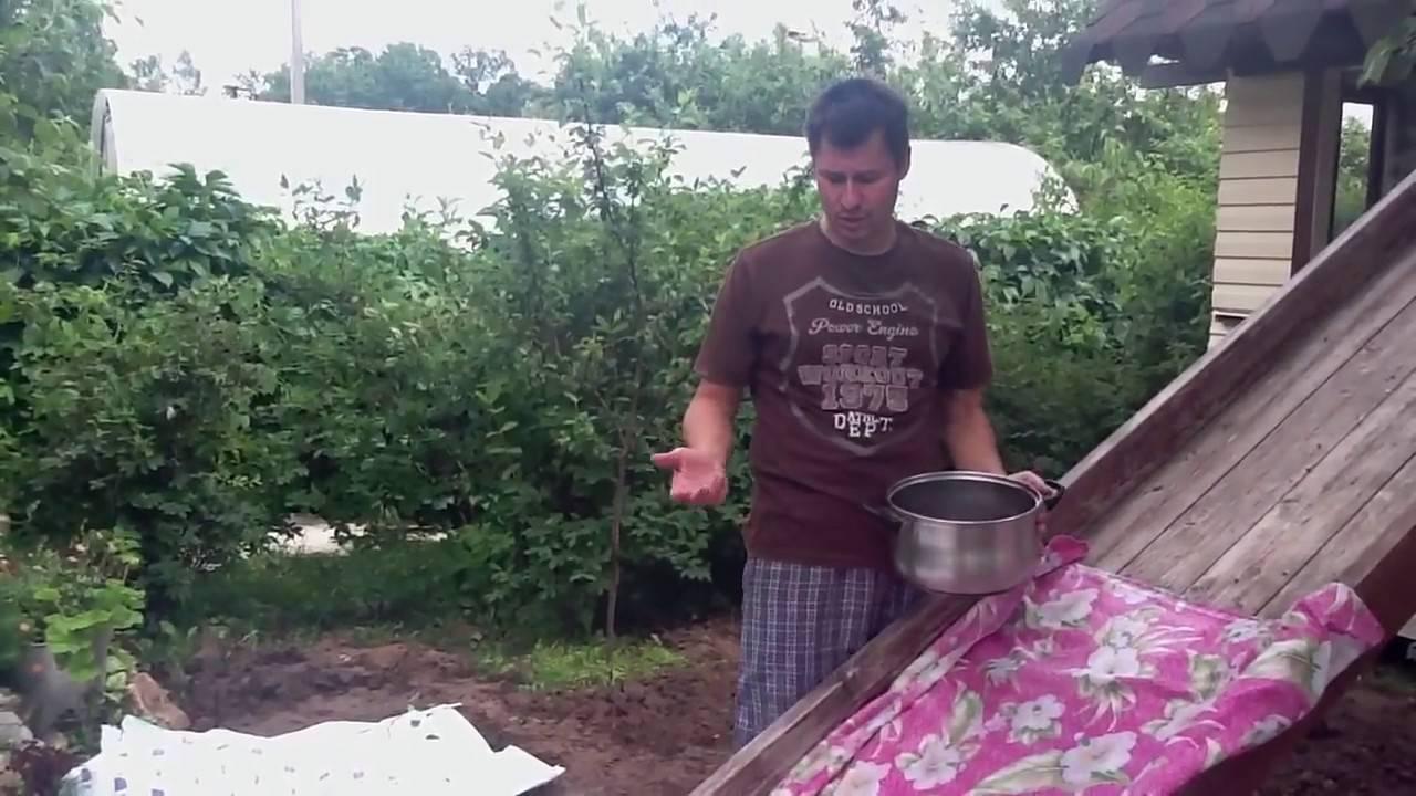 Как быстро перебрать чернику, почистить от листьев