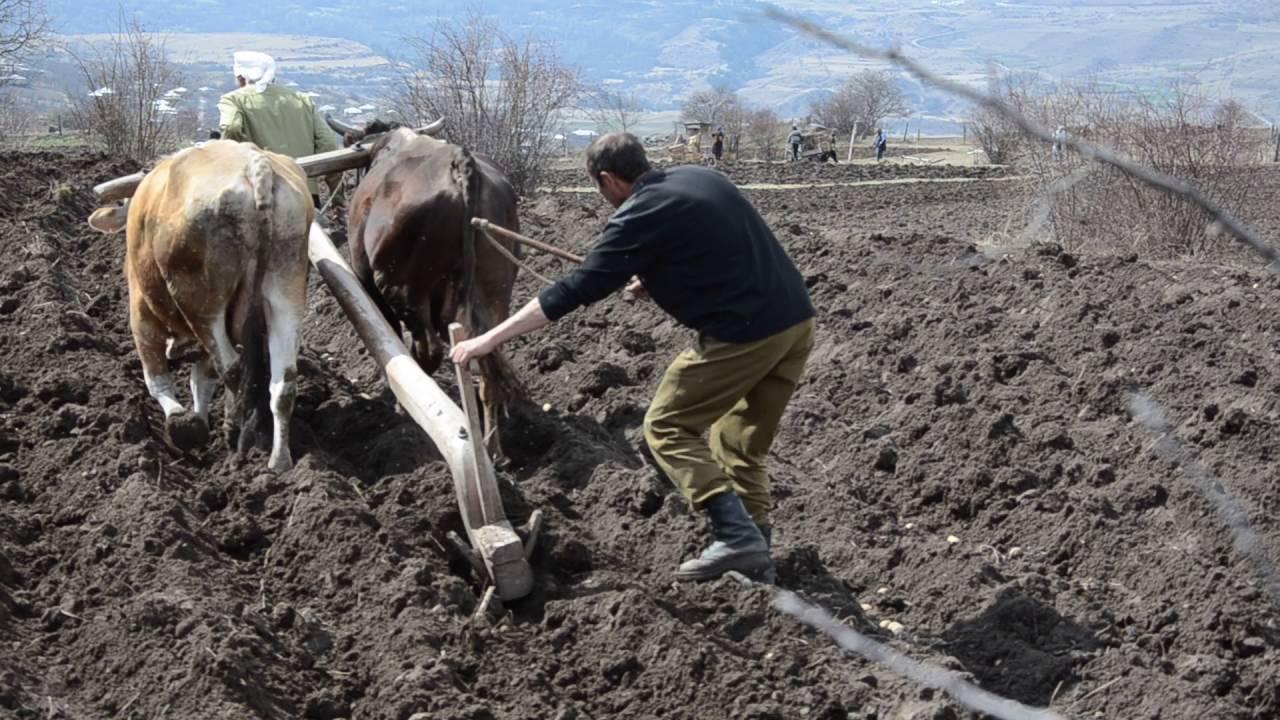 Посадка картофеля в гребни: пошаговая инструкция