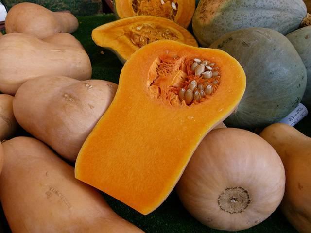 Тыква Ореховая (Баттернат): польза и вред, калорийность, рецепты