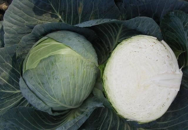 Сорт капусты Центурион