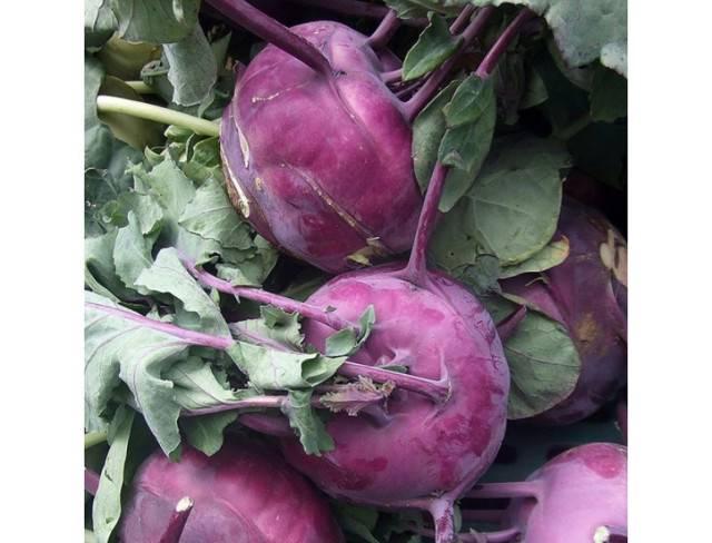 Капуста кольраби: фото с описанием, выращивание в открытом грунте, сроки сбора урожая