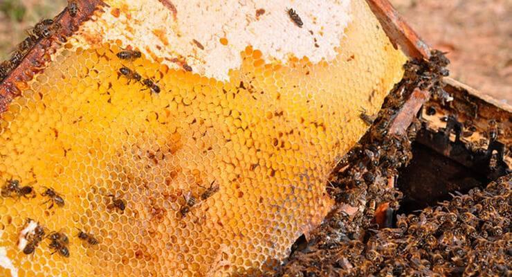 Причины поноса у пчел весной и правильное лечение