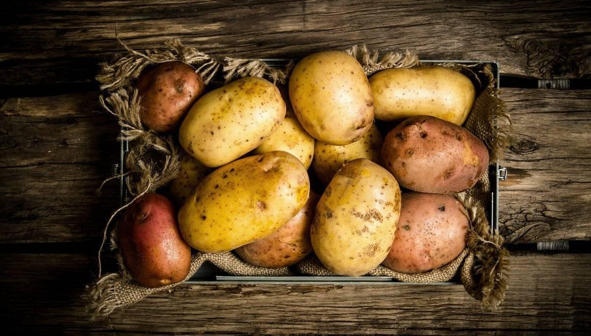 Почему картошка чернеет после варки или при хранении