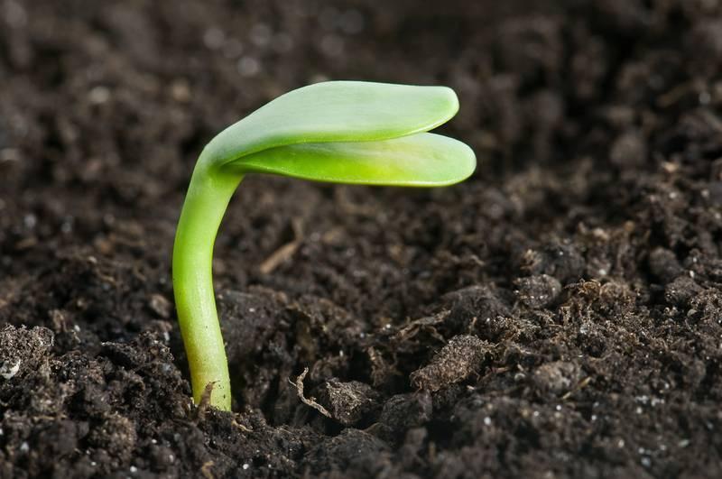 Куриный помет как удобрение: как применять, отзывы и рецепты подкормок от садоводов