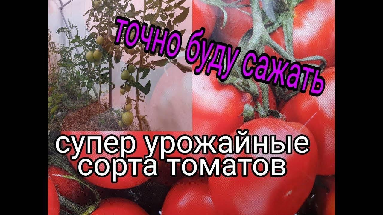 Высокая урожайность при минимальных затратах — томат «спасская башня f1»: отзывы огородников и секреты выращивания