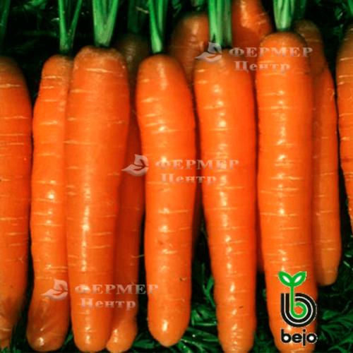 Морковь балтимор f1