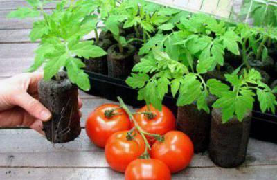 """Томат """"дар заволжья розовый"""": обзор вкусовых качеств и урожайности помидора"""
