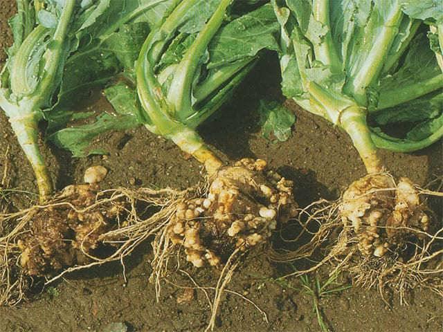 Как избавиться от слизней в огороде - защита и профилактика