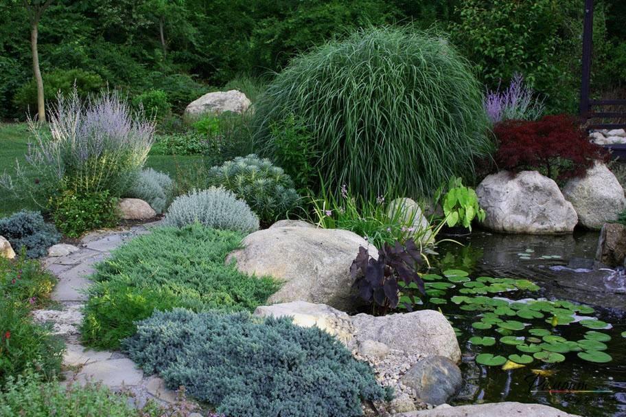 Можжевельник: 140 фото вариантов применения растения и особенности его сочетания в ландшафтном дизайне