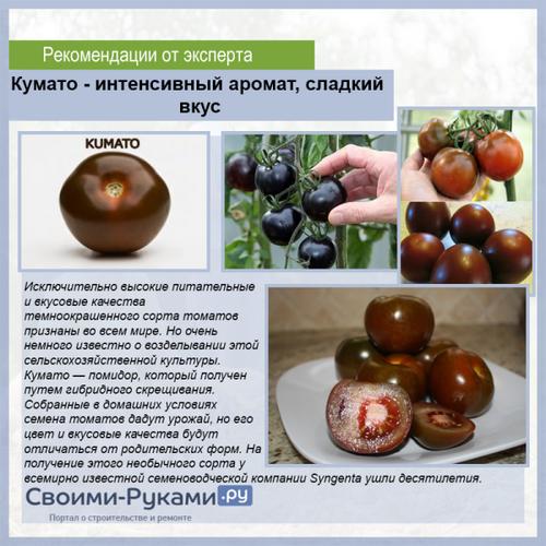 Кумато — сорт помидор