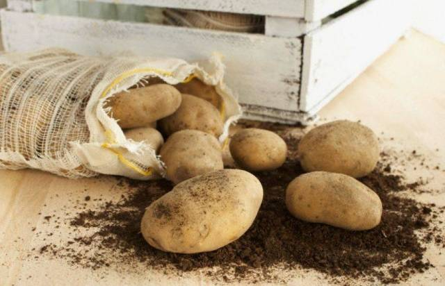 Описание и характеристики картофеля сорта тимо
