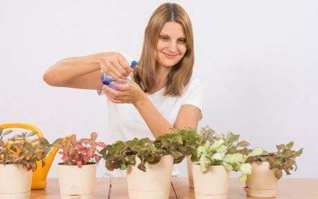 Удобрения для хризантем