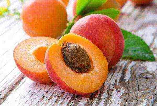 Как посадить персик из косточки и вырастить дерево