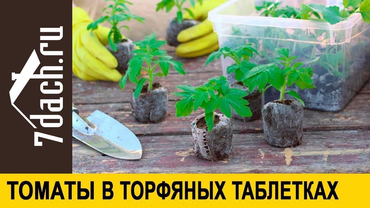 Рассада помидор в торфяных горшочках: как сажать и выращивать с фото и видео