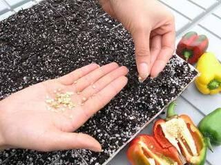 Семена перца на рассаду. какие семена выбрать?