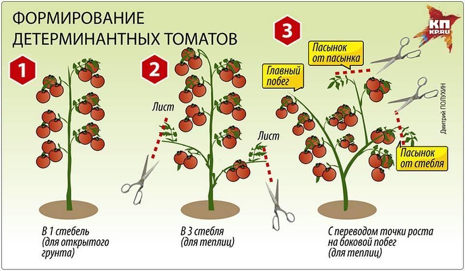 Как правильно пасынковать тепличные помидоры: схема и пошаговое руководство