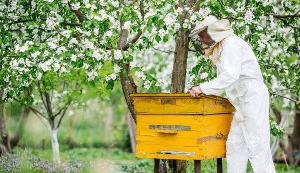 Апирой: инструкция по применению для пчел