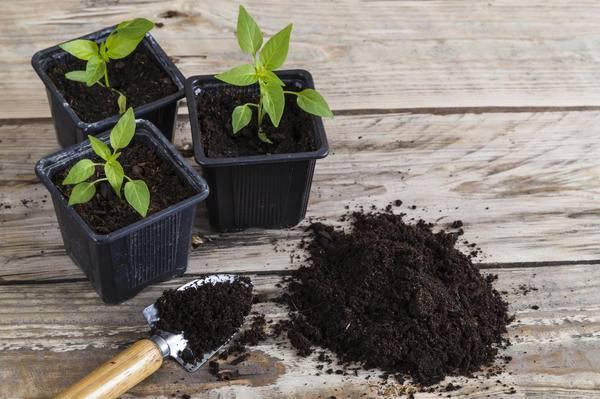 Выращиваем рассаду огурцов— секреты опытных садоводов