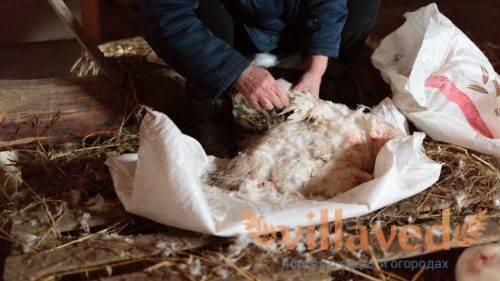 Как разделать утку – пошаговая инструкция, что нужно для разделывания