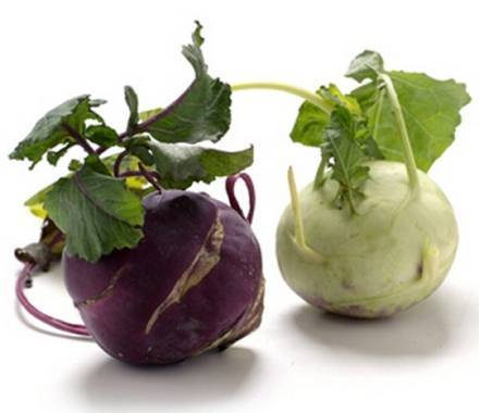 Капуста кольраби: полезные свойства и противопоказания, рецепты для здоровья