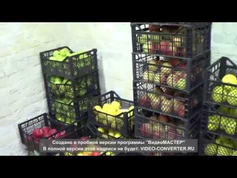 Как сохранить яблоки на зиму свежими