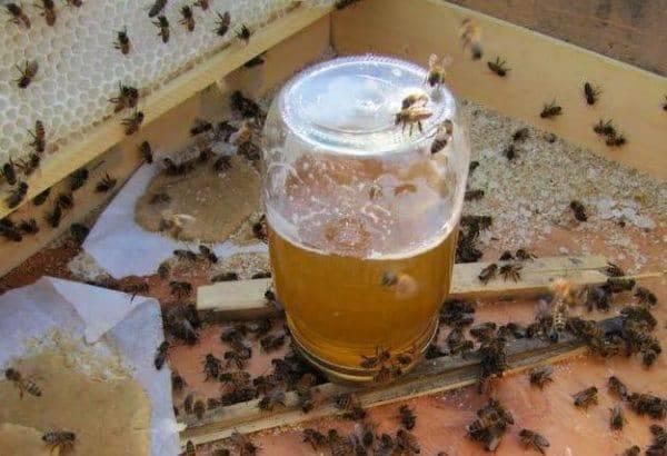 Использование инвертированного сиропа в пчеловодстве