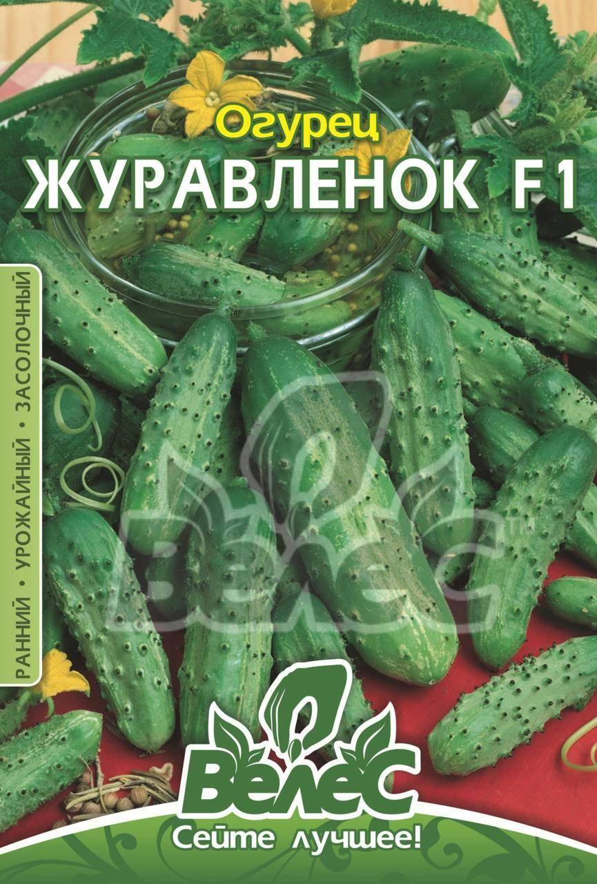 Гибрид огурцов с хорошим иммунитетом «ажур f1»: фото, видео, описание, посадка, характеристика, урожайность, отзывы