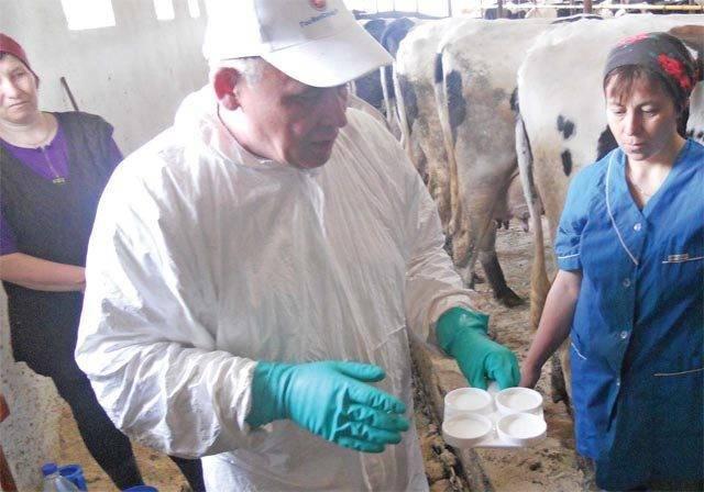 Как лечить телязиоз у коров