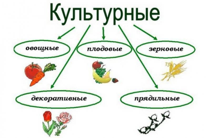 Где и как в россии растет арахис: советы и фото