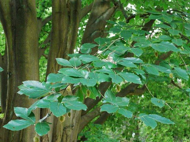 Какие лиственные деревья и кустарники посадить на участке