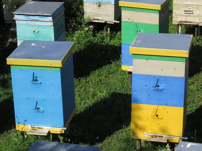 Пчеловодство: расписание на август