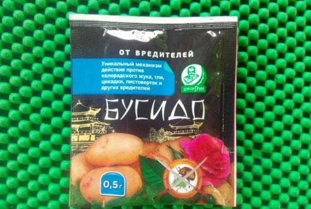 Картофель ильинский — описание сорта, фото, отзывы, посадка и уход