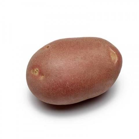 Сорт картофеля «артемис»: характеристика, описание, урожайность, отзывы и фото