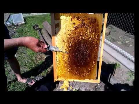Сироп для пчел: от приготовления до подачи