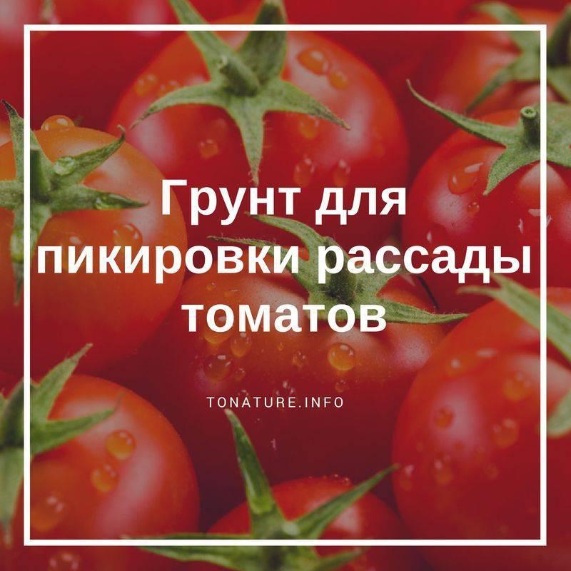 Как выбрать лучший готовый грунт для рассады томатов и перцев? обзор самых популярных смесей
