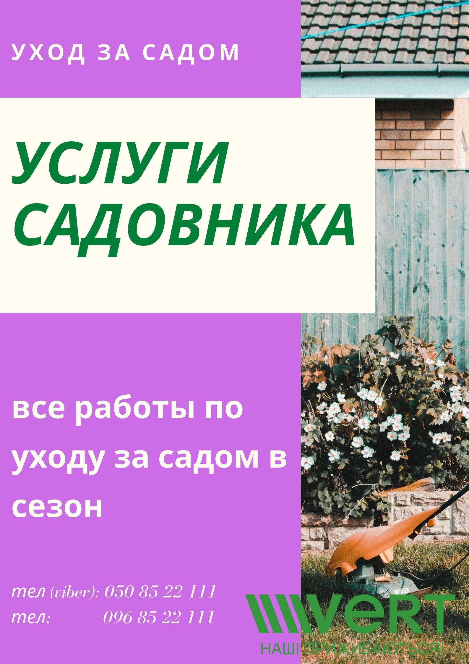 Гортензия «тардива» (28 фото): описание гортензии метельчатой tardiva, посадка, уход и размножение