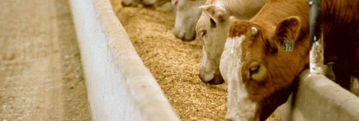 Применение антибиотиков при выращивании сельскохозяйственных животных. антибиотики в сельскохозяйственной продукции