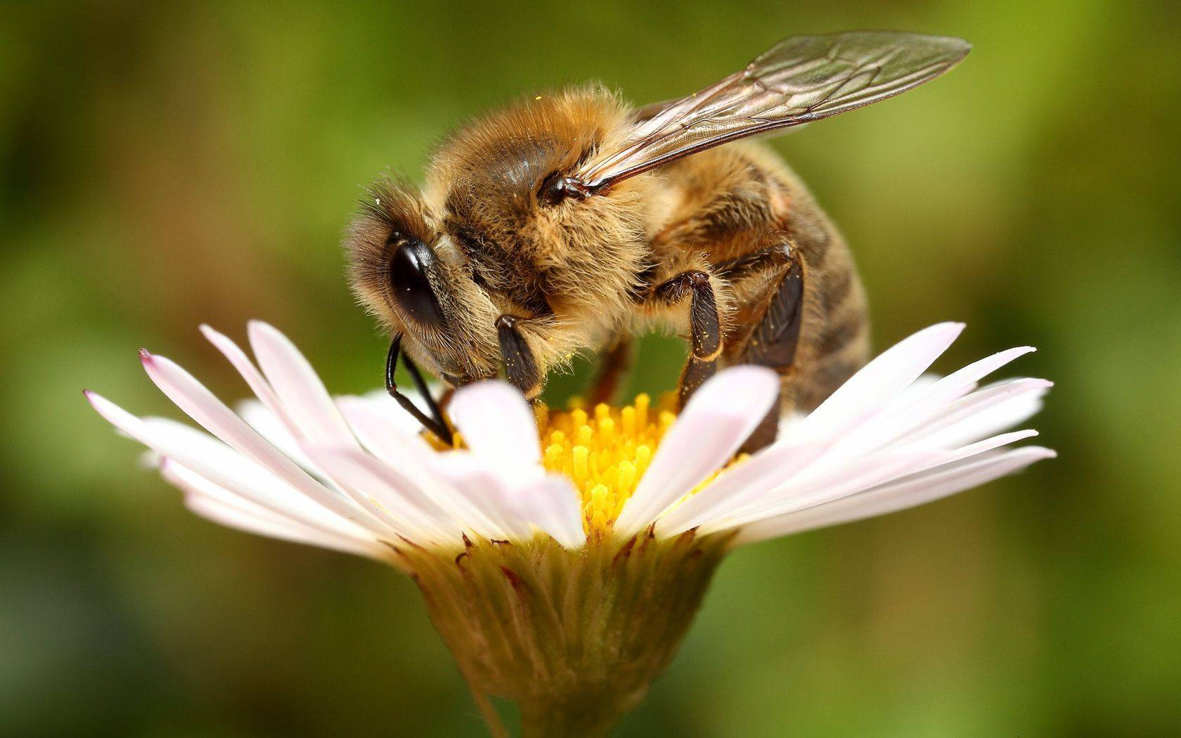 Бисанар для пчел: отзывы, инструкция по применению для возгонки