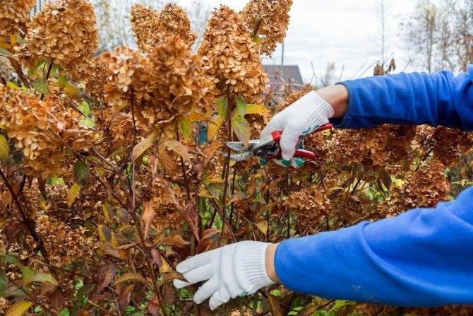 Руководство по посадке облепихи весной саженцами: как расположить и посадить кусты, чтобы они плодоносили