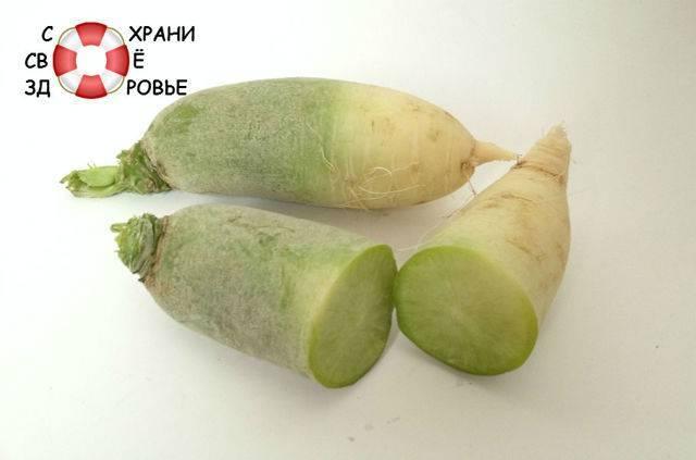 Зеленая (маргеланская) редька: полезные свойства и противопоказания