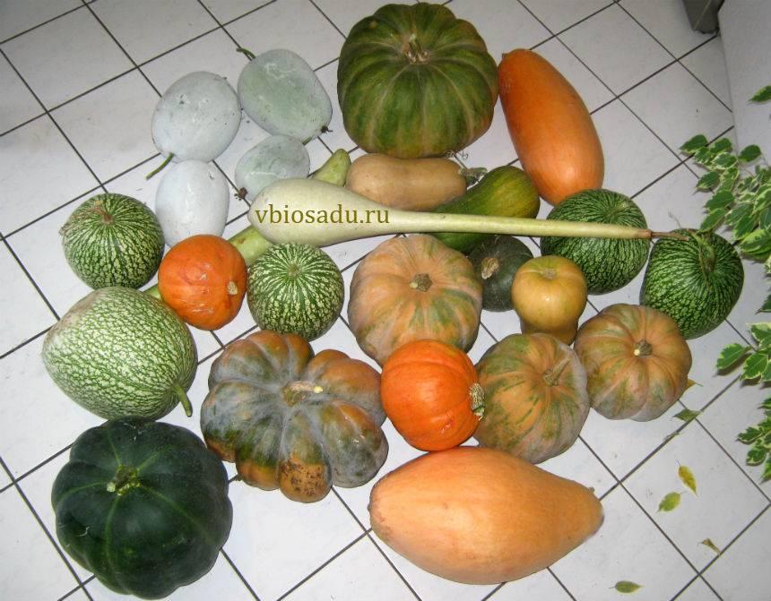 Тыква Спагетти: фото, рецепты приготовления