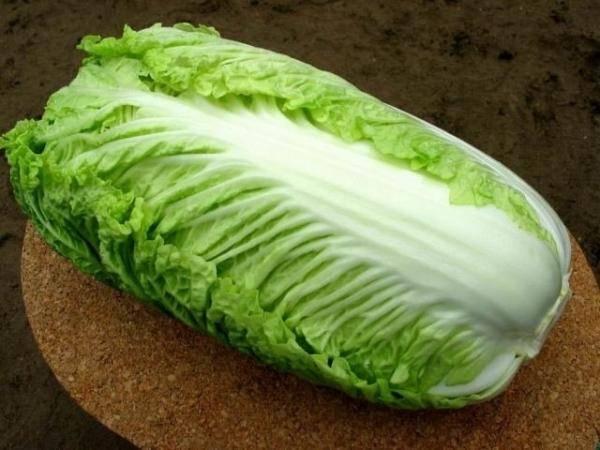 Пекинская капуста билко f1: чем уникален данный гибридный сорт, каковы условия выращивания, а также советы для огородников и интересные рецепты