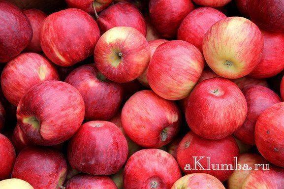 Как правильно хранить яблоки в погребе?
