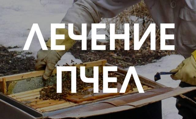 Как избавиться от гнильца у пчел разных типов