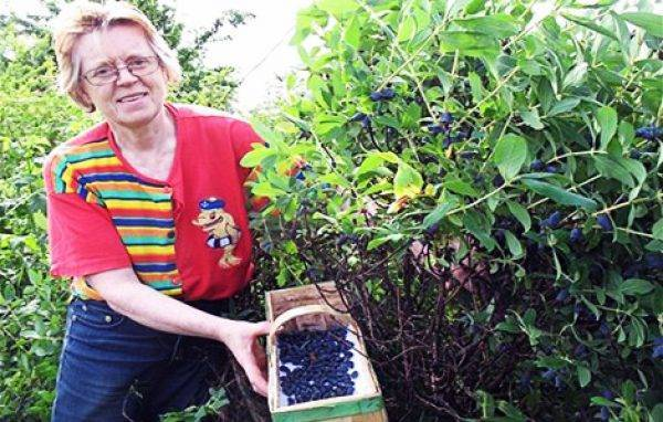 Чем подкормить ягодные кустарники летом: вся информация в таблицах