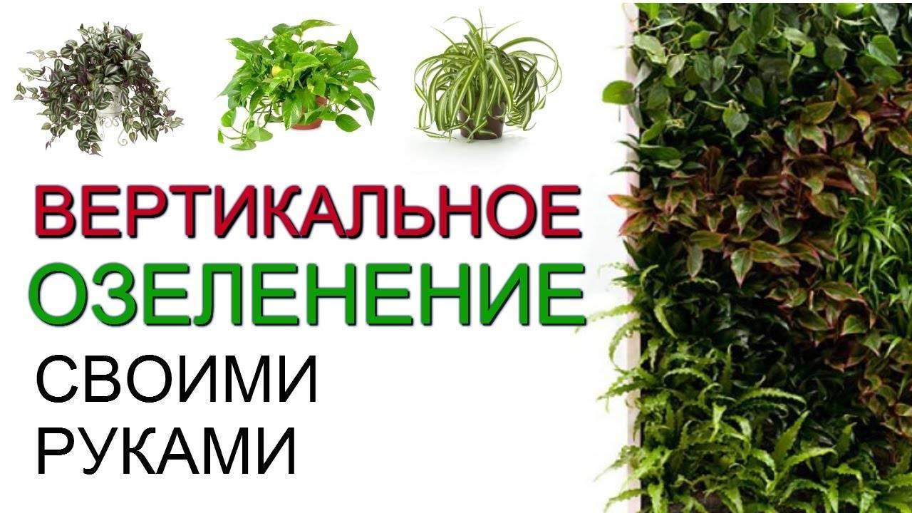 Вертикальное озеленение садового участка
