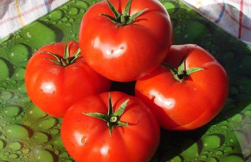 Сорт томата «иришка f1»: описание, характеристика, посев на рассаду, подкормка, урожайность, фото, видео и самые распространенные болезни томатов